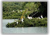 Vedanthangal (Birds Sanctuary)